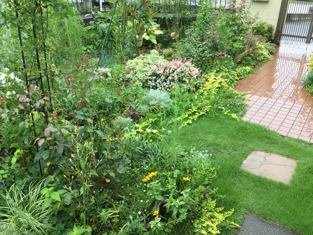 自宅ガーデンと菜園より